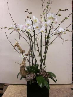 Santa Monica Flowers Chic box of white orchids