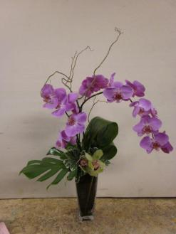 Santa Monica Flowers Curved Orchids